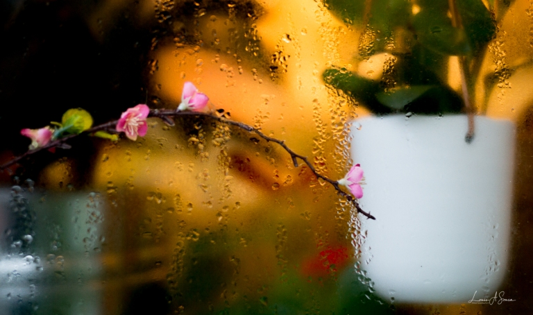 Flowers in the Window_