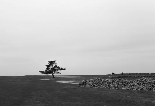 Tree at Sakonnet Golf Club