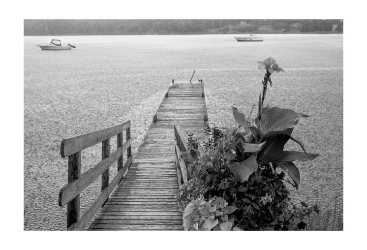Dock in the Rain