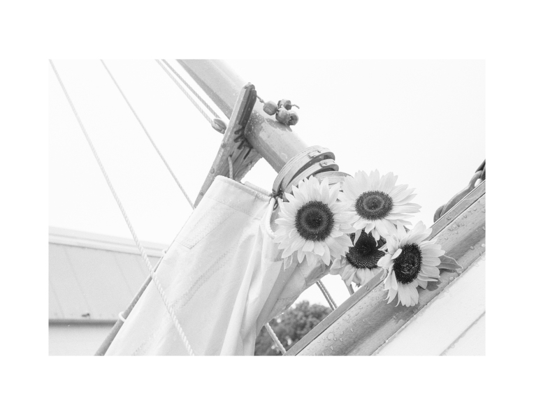 Sunflowers on the Boom