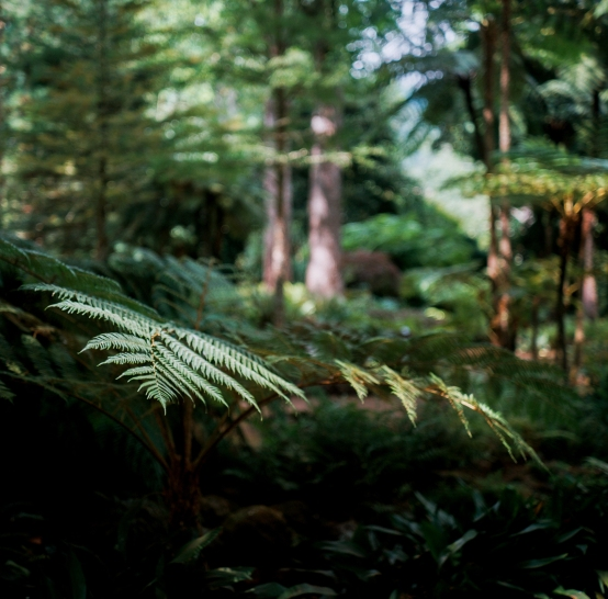 Shot in the forest trails near the Furnas Hot Springs.