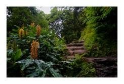 Ginger Plants