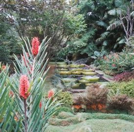 A beautiful pond near the Furnas Hot Spring.