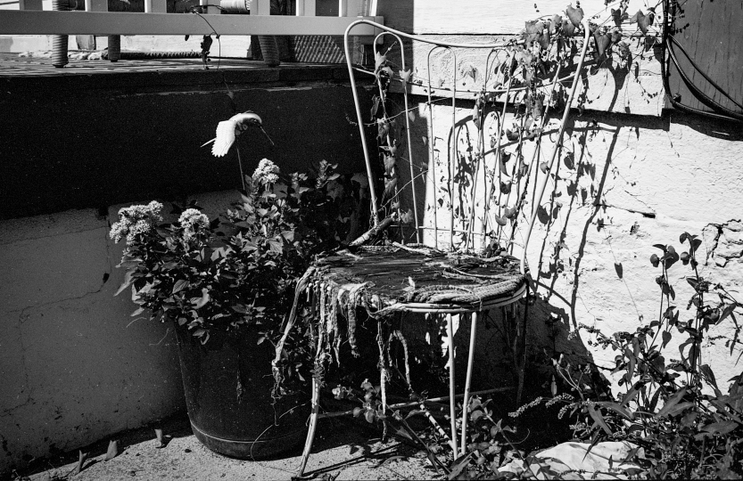 Tattered Chair