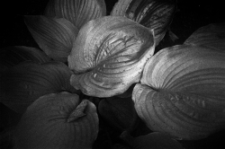 Flowers and Leaves #3