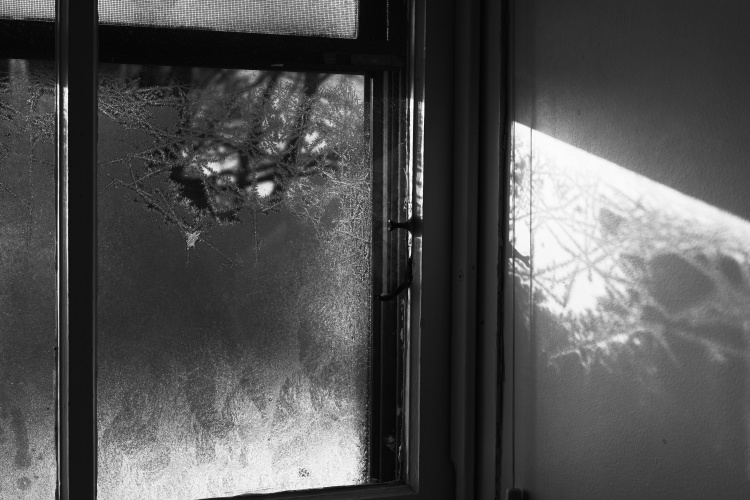 Warren Window
