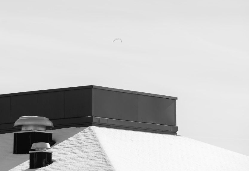 Rooftop and Gull-1