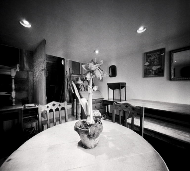 Fresh Flower, Pinhole