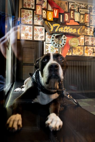 Dog at the Tattoo Parlour