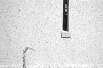 Leica M6, Fuji Acros Pushed 2 stops.