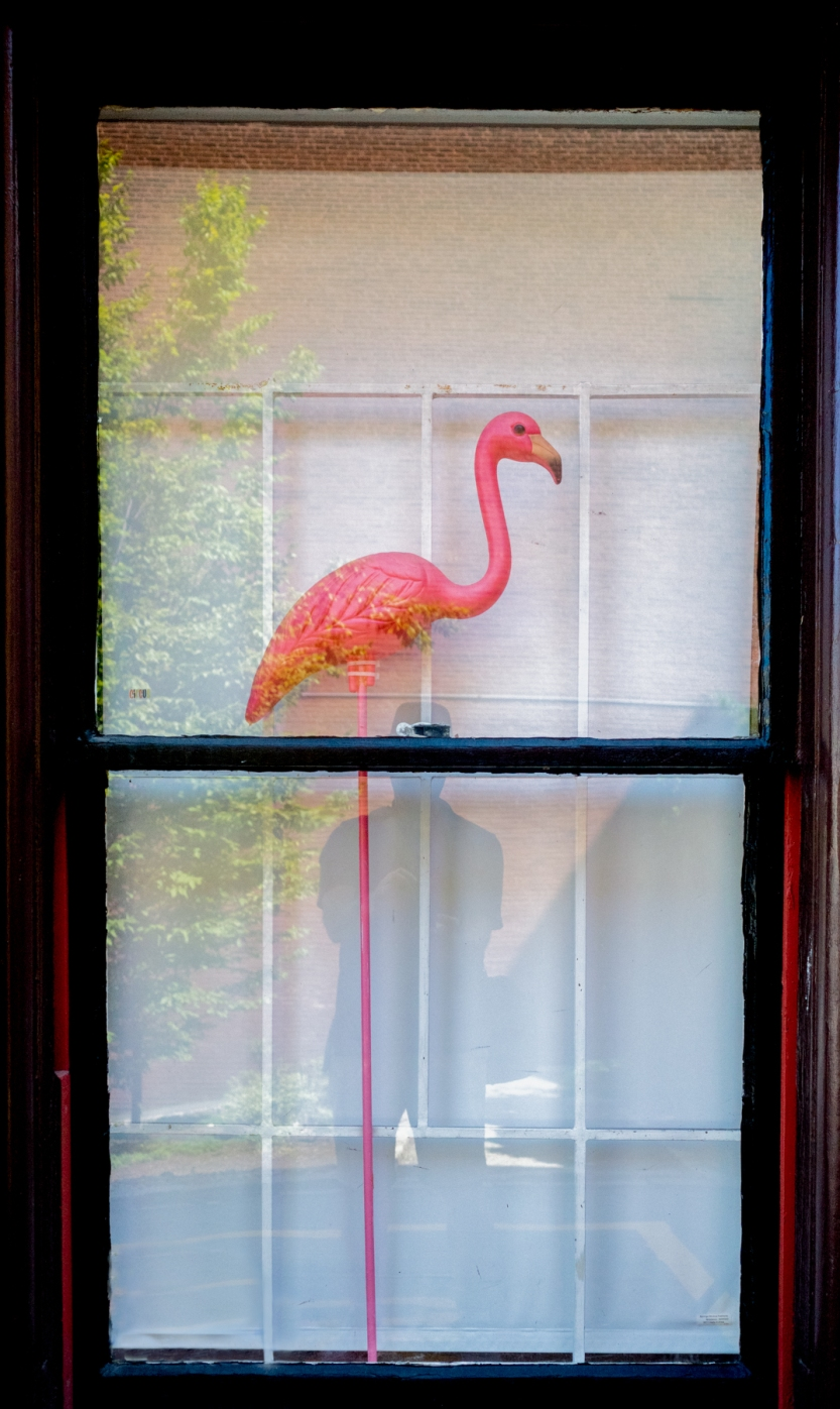 Flamingo at RISD