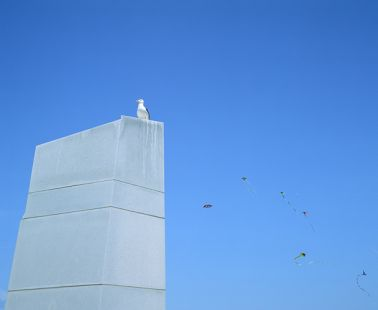 Gull and Kites