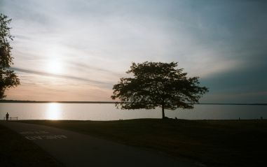 Lone Tree and Woman