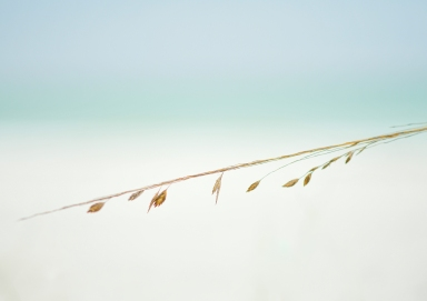 Leaves on the Beach