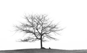 Surprise Hill Tree-0063